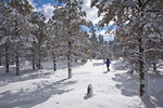 Cross-country skiing through snowy ponderosa pine forest in Fay Canyon area of Coconino Naitonal Forest, Flagstaff, Arizona, AGPix_1154