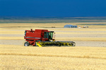 Farmer harvesting barley with combine amid vast fields of grain in Glacier County near Cutbank, Montana, AGPix_1179