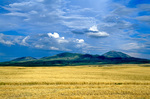 Sweet Grass Hills, West Butte, rising above wheat fields of the Great Plains east of Sunburst, Montana, AGPix_1186