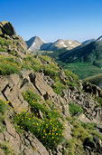 Alpine wildflowers in Tushar Mountains with Mount Belknap in background, Fish Lake National Forest, Utah, AGPix_1235 