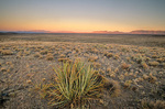 Yucca in Pakoon Basin at sunrise, Mohave Desert area of Grand Canyon-Parashant National Monument, Arizona, AGPix_1282
