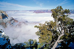Clouds fill Grand Canyon below rim, during cold air inversion, Grand Canyon National Park, Arizona, AGPix_1302