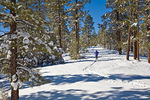 Cross-country skiing after big snow in Fay Canyon area of Coconino National Forest, Flagstaff, Arizona, AGPix_1307