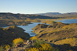 Alamo Lake State Park, a reservoir on the Bill Williams River, with brittlebush shrubs in flower, LaPaz County, Arizona, AGPix_1312