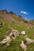 Alpine tundra vegetation below talus slopes, high in the Inner Basin of San Francisco Peaks, Coconino National Forest, Flagstaff, Arizona, AGPix_1315