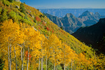 Autumn aspens on North Rim with Deva and Brahma Temples in background, Grand Canyon National Park, Arizona,  AGPix_1349