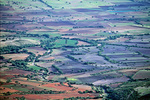 Farmlands of the Bajio region in valley below Cristo Rey in state of Guanajuato, Mexico, AGPix_1378