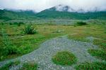 Pioneering vegetation of dryas and alder revegetate the deglaciated landscape in Muir Inlet area of Glacier Bay National Park, Alaska, AgPix_1409