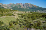 Plant succession, alder, willow and cottonwood trees invade dryas meadows as revegetation of deglaciated landscape occures in Muir Inlet area of Glacier Bay National Park, Alaska, AgPix_1411