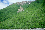 Forest of alder, cottonwood and willow covers mountainsides, an example of post glacial plant succession in Glacier Bay National Park, Alaska, AgPix_1412