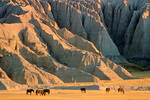 Horses graze on prairie below Badlands wall on south side of Cunny Table, Pine Ridge Indian Reservation, South Dakota, AgPix_1422
