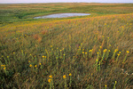Ordway Prairie with prairie pothole wetland, a Nature Conservancy Preserve west of Leola, South Dakota, AgPix_1424 