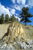 Petrified Redwood tree stump, exposed by erosion, at Florissant Fossil Beds National Monument, near Florissant, Colorado, AGPix_1426 