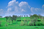 Umbrian landscape of fields and trees and clouds, near town of Montefalco, Umbria, Italy, AGPix_1429