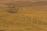 Rolling hills with wheat farms in the Palouse area near Colfax in eastern Washington,  _MG_37352, AGPix_1486