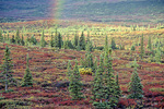 "Rainbow over Boreal Forest or ""Taiga"" near Wonder Lake at Denali National Park, Alaska, AKDEN_00107, AGPix_1489"