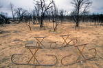 Remains of burnt picnic tables after forest fire at Mesa Verde National Park, Colorado, CO_04483, AGPix_1554