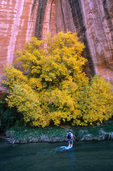 Tree in autumn color and hiker wading in Escalante River, in Grand Staircase-Escalante National Monument, near Boulder, Utah, UT_00825, AGPix_1563