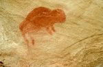 Pictograph of bison painted on rock at Croton Springs at Big Bend National Park, Texas, TXBB_01814