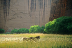 Horses in grassy pasture below sandstone cliffs at Canyon De Chelly National Monument, Navajo Nation, Arizona, AZ_04185, AGPix_1631