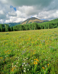Meadow with wildflowers at Geyser Pass with Haystack Mountain in background, in La Sal Mountains, Manti-La Sal National Forest near Moab, Utah, UT_04003, AGPix_1673