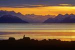 Bald Eagle on shore of Glacier Bay at sunset, Fairweather Mountains is distance, Glacier Bay National Park, Alaska, AGPix_1706