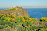 Lighthouse and Giant Coreopsis flowers on East Anacapa Island, Channel Islands National Park, California, AGPix_1711
