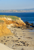 Elephant seals on beach at Cardwell Point on San Miguel Island, Channel Islands National Park, California, AGPix_1747
