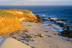 Elephant seals on beach at Cardwell Point on San Miguel Island, Channel Islands National Park, California, AGPix_1748