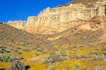 Red Rock Canyon State Park, spring wildflowers below desert cliffs, Kern County, California, USA, AGPix_1791