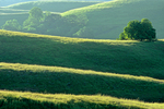 Grassy hills with oaks, Cholame Hills, north of Paso Robles, Monterey County, California, USA, AGPix_1817