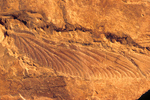 Fossil insect wing, from Hermit Shale, early Permian age, museum collection #3090, at Grand Canyon National Park, Arizona, AGPix_1828