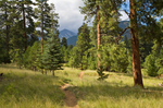 Little Elden Trail winding through  ponderosa forest and meadow,  with Freemont  Peak in distance, San Francisco Peaks area of Coconino National Forest, Flagstaff, Arizona, AGPix_1851