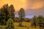 Ponderosa Pine forest and meadow, sunset after summer thunderstorm, at Bean North Ranch home, Flagstaff, Arizona, AGPix_1870