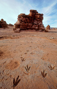 Fossil Dinosaur Tracks in the Painted Desert, Ward Terrace, Navajo Reservation, Cameron, Arizona, AGPix_1923