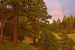 Rainbow after summer rainstorm over ponderosa pine forest in Fay Canyon area, Coconino National Forest, Flagstaff, Arizona, AGPix_1929