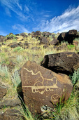 Petroglyphs on boulders at Rinconada Canyon at Petroglyph National Monument, Albuquerque, New Mexico, USA, AGPix_1949