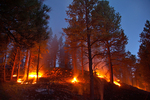 Low intensity prescribed fire, burning in understory of ponderosa pine forest, after thinning of small diameter trees, Fay Canyon area of Coconino National Forest, Flagstaff, Arizona