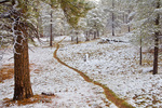 Trail throug forest of ponderosa pine trees after a late May snowstorm, near Flagstaff, Arizona, AGPix_1976