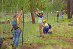 Volunteer workday, Friends of Northern Arizona Forests and other volunteers and USFS staff work to repair an exclosure fence meant to preserve young aspens from browsing by elk, deer and livestock, Coconino National Forest north of Flagstaff, Arizona, USA,  AGPix_1978