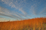 Tallgrass prairie at Mount St. Francis, a prairie restoration project at, Dubuque, Iowa, AGPix_2005