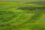 Wet meadow vegetation at Mormon Lake near Dairy Springs, in Coconino National Forest, south of Flagstaff, Arizona, AGPix_2020
