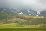 Snowy mountainsides rise above horses in green meadows of the Pian Grande near Castelluccio in Monti Sibillini National Park, in the Central Apennines, Umbria, Italy AGPix_2022
