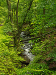Stream in the forest of Morgenbach valley south of Trechtingshausen, along the Rhine Castles Way Trail on west bank of the Rhine, Upper Middle Rhine Valley World Heritage Site, Germany, AGPix_2027