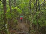 Walking trail in Kii Mountain Range, Kumano Kodo Pilgrimage Trail, Nakahechi Route, above Takijiri-oji, a UNESCO World Heritage site, on the Kii Peninsula, Wakayama Prefecture, Japan, AGPix_2035