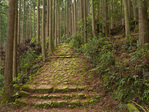 Trail in the mountain forest along the Kumano Kodo Pilgrimage Trail near Kusu-no-Kubo Lodging remains, south of Koguchi, Nakahechi Route, in Kii Mountain Range, UNESCO World Heritage site, on the Kii Peninsula, Wakayama Prefecture, Japan, AGPix_2043