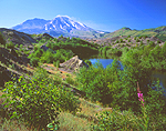 Hummocks and Mount St Helens, Washington.