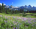 Tatoosh Range and meadow in Mount Rainier National Park, Washington