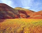 Wildflower bloom at the Painted Hills, John Day Fossil Beds, Oregon