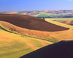 Rolling hills & grain crops in Washington State